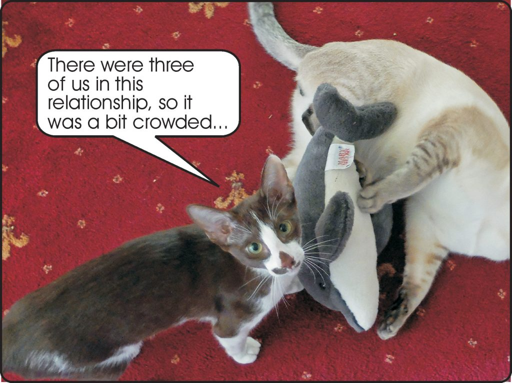 Cats' threesome