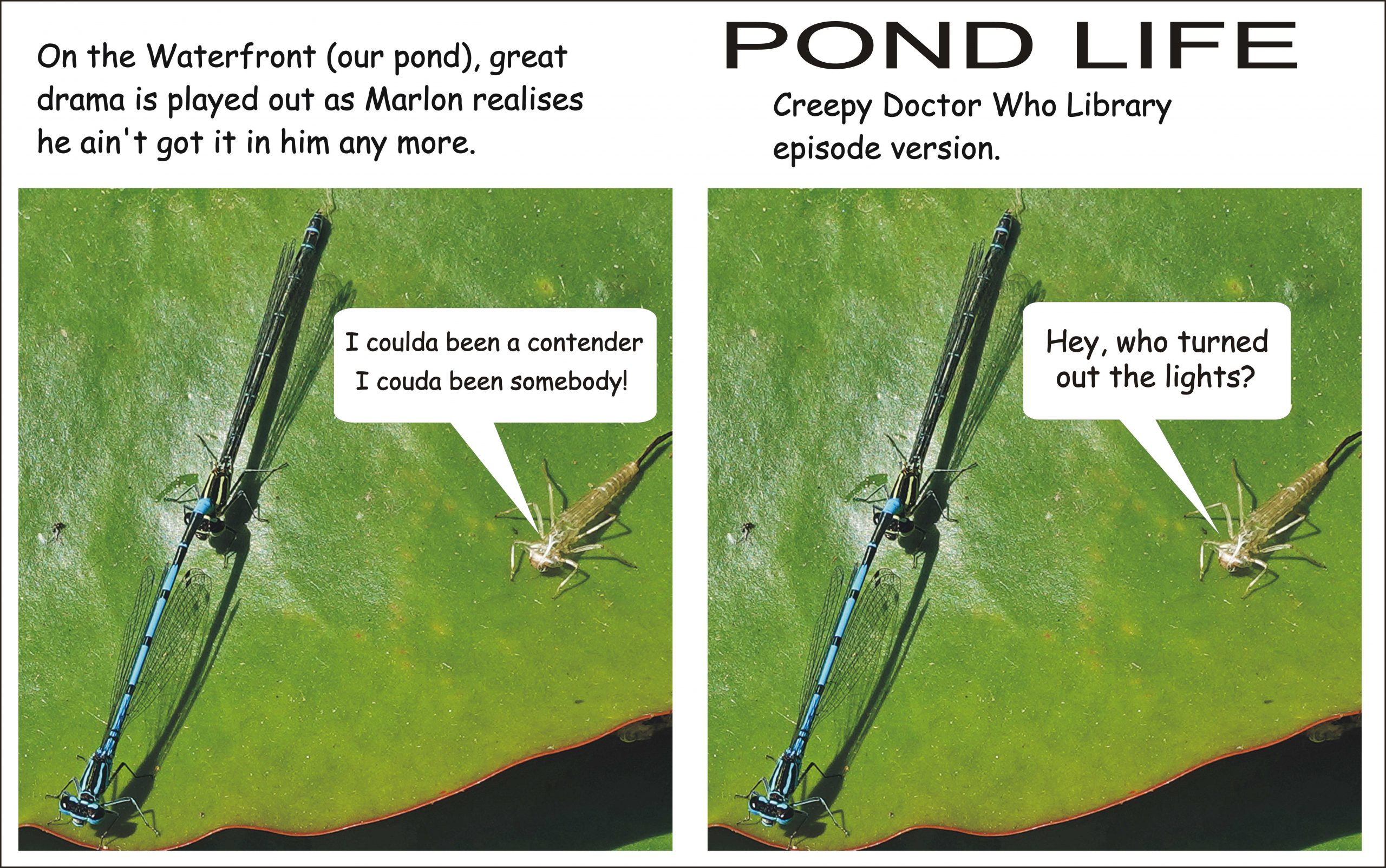 Pond life and death