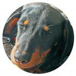Watchdog dog 2