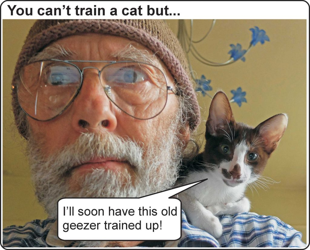 Can't train a cat but...